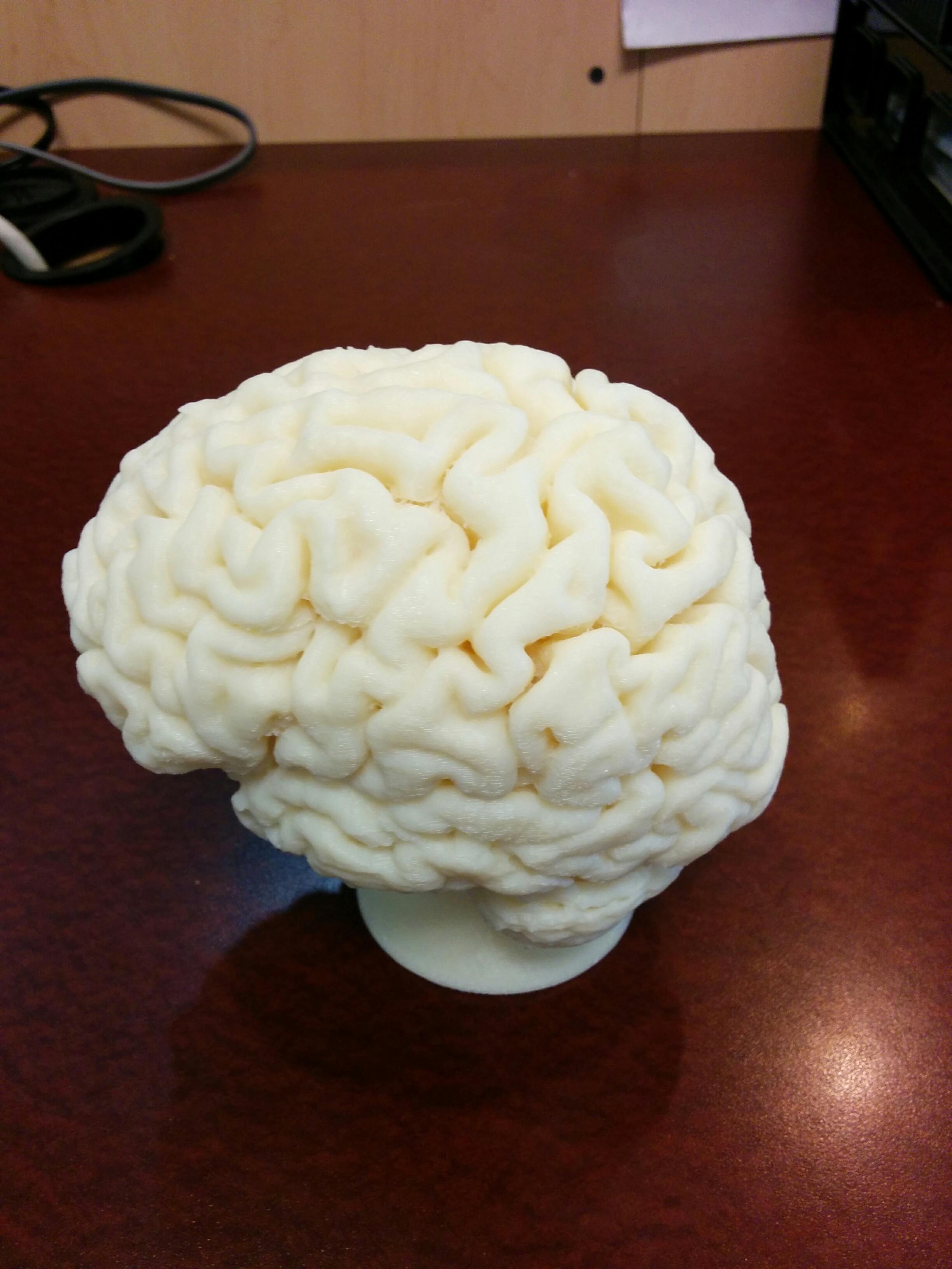 human brain 3D print