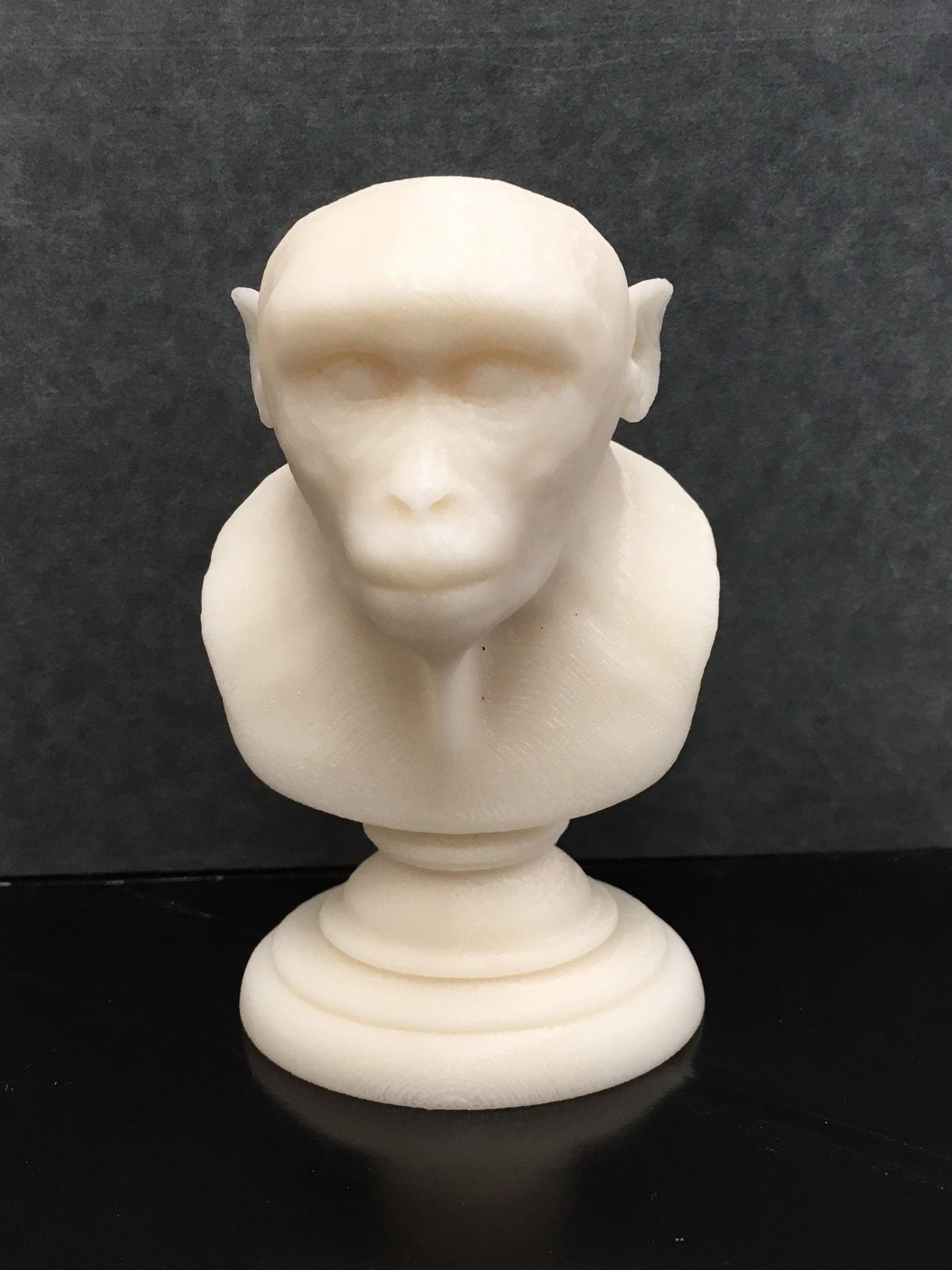 Monkey bust model