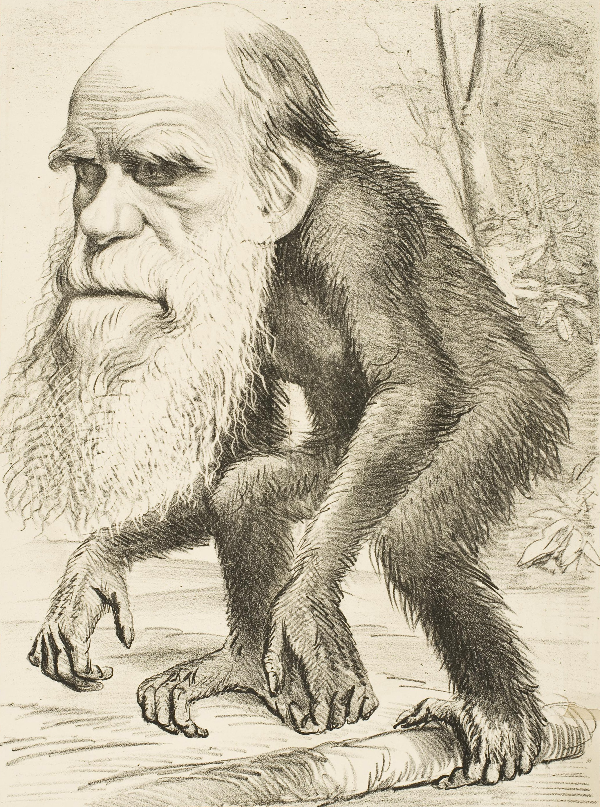 Cartoon of Darwin as an ape (editorial from 1871)