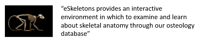 """eSkeletons provides an interactive environment in which to examine and learn about skeletal anatomy through our osteology database"""