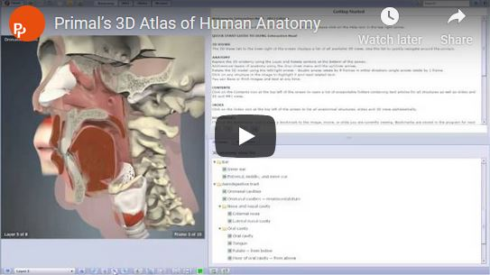 3D Atlas Video