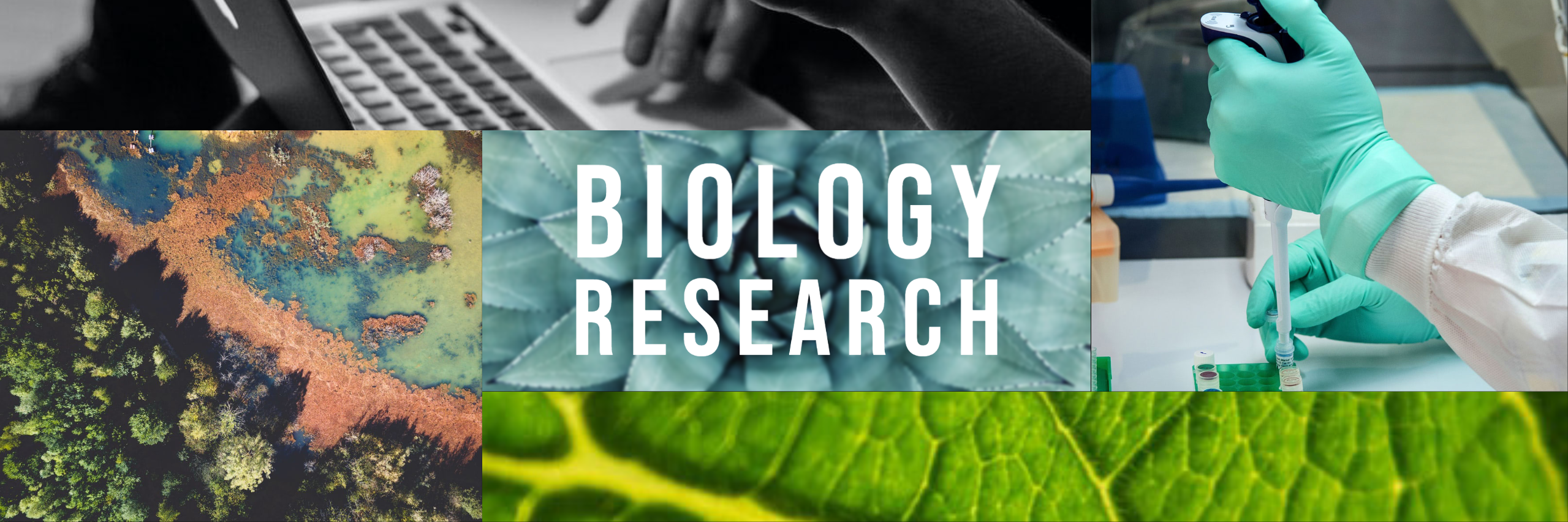 Banner that says Biology Research