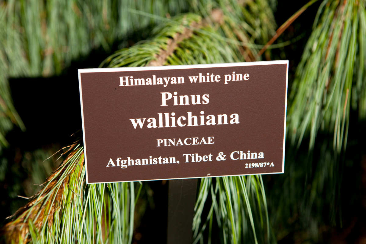Photograph of plant label