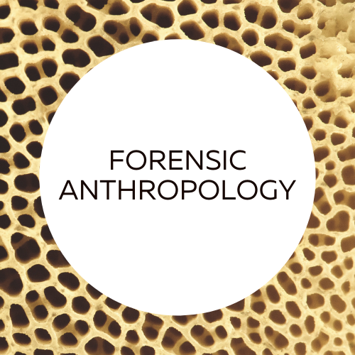 Forensic anthropology research guide.
