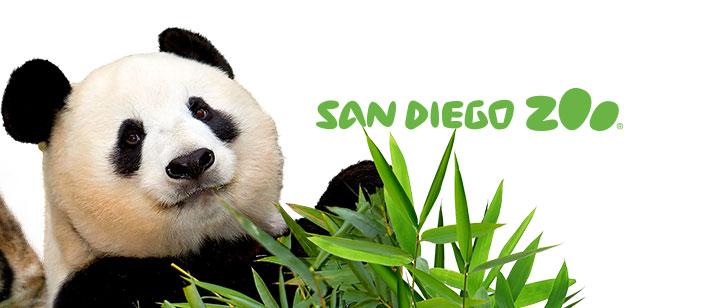 San Diego Zoo live cam website