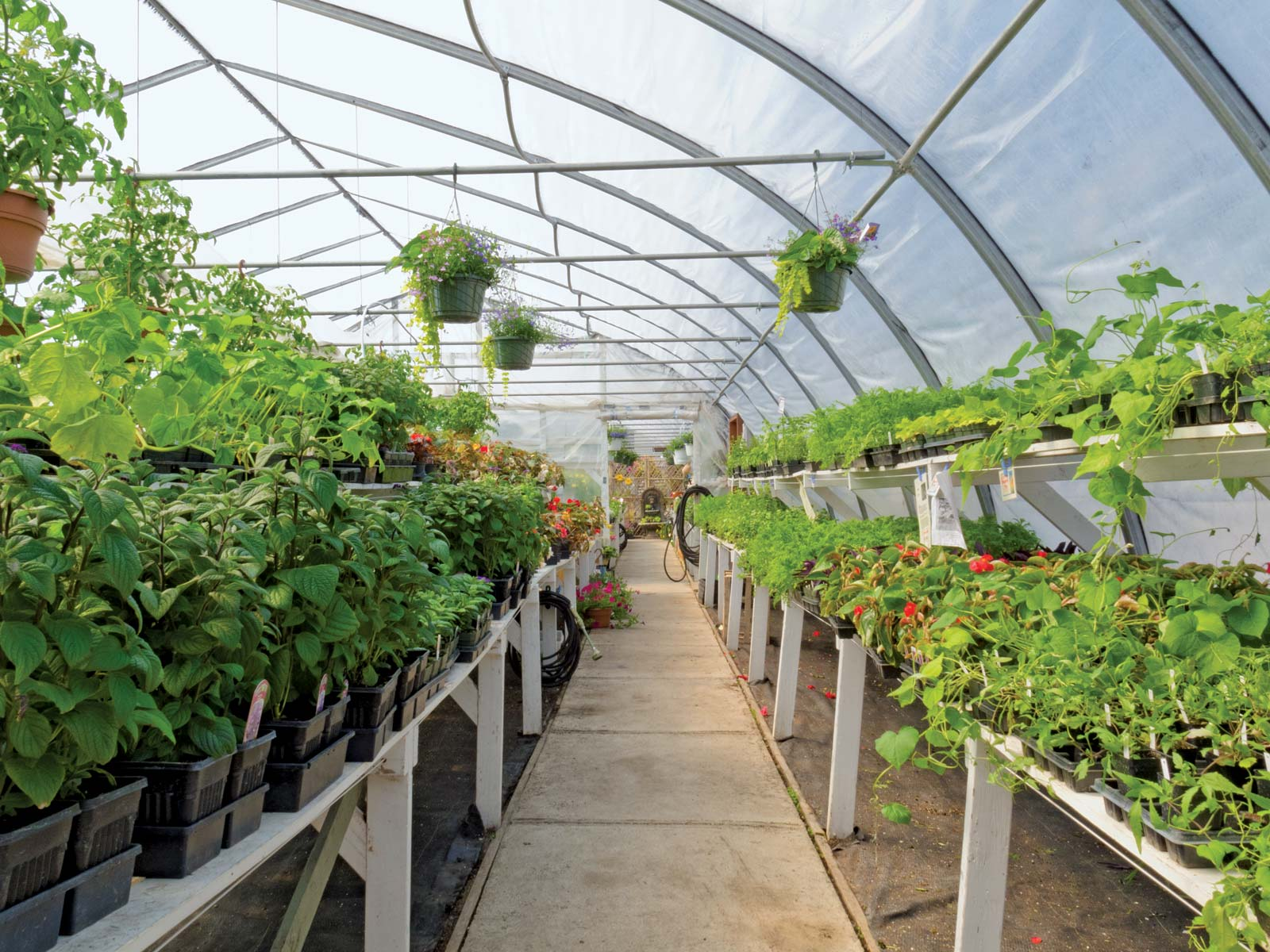 Image of a greenhouse
