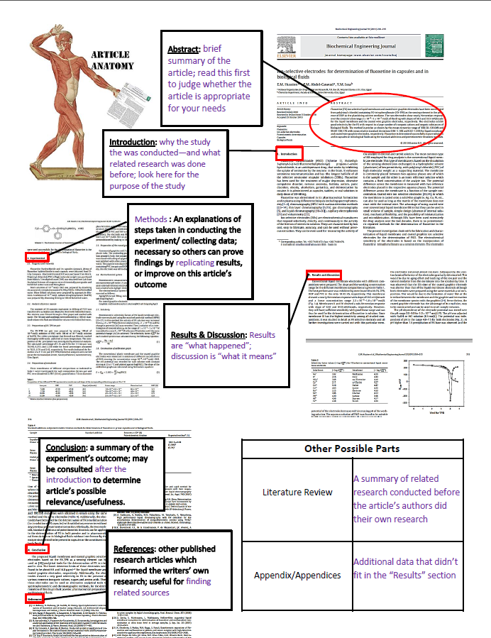 article anatomy diagram
