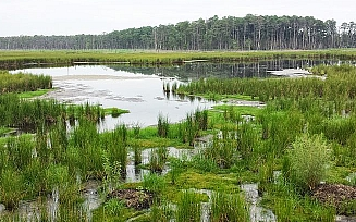 Wetlands Rehabilitation image