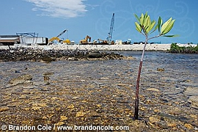 Brandon Cole Consequences of Wetland Destruction image