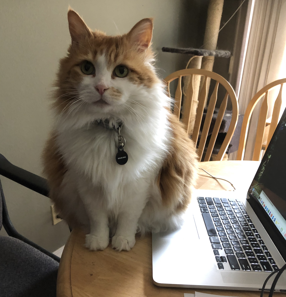 photo of Cleo sitting next to a laptop