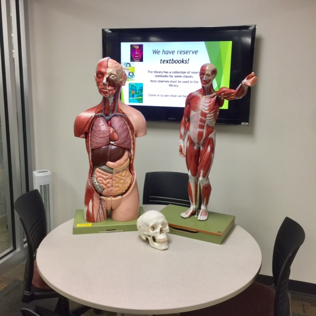Anatomy models in group study room