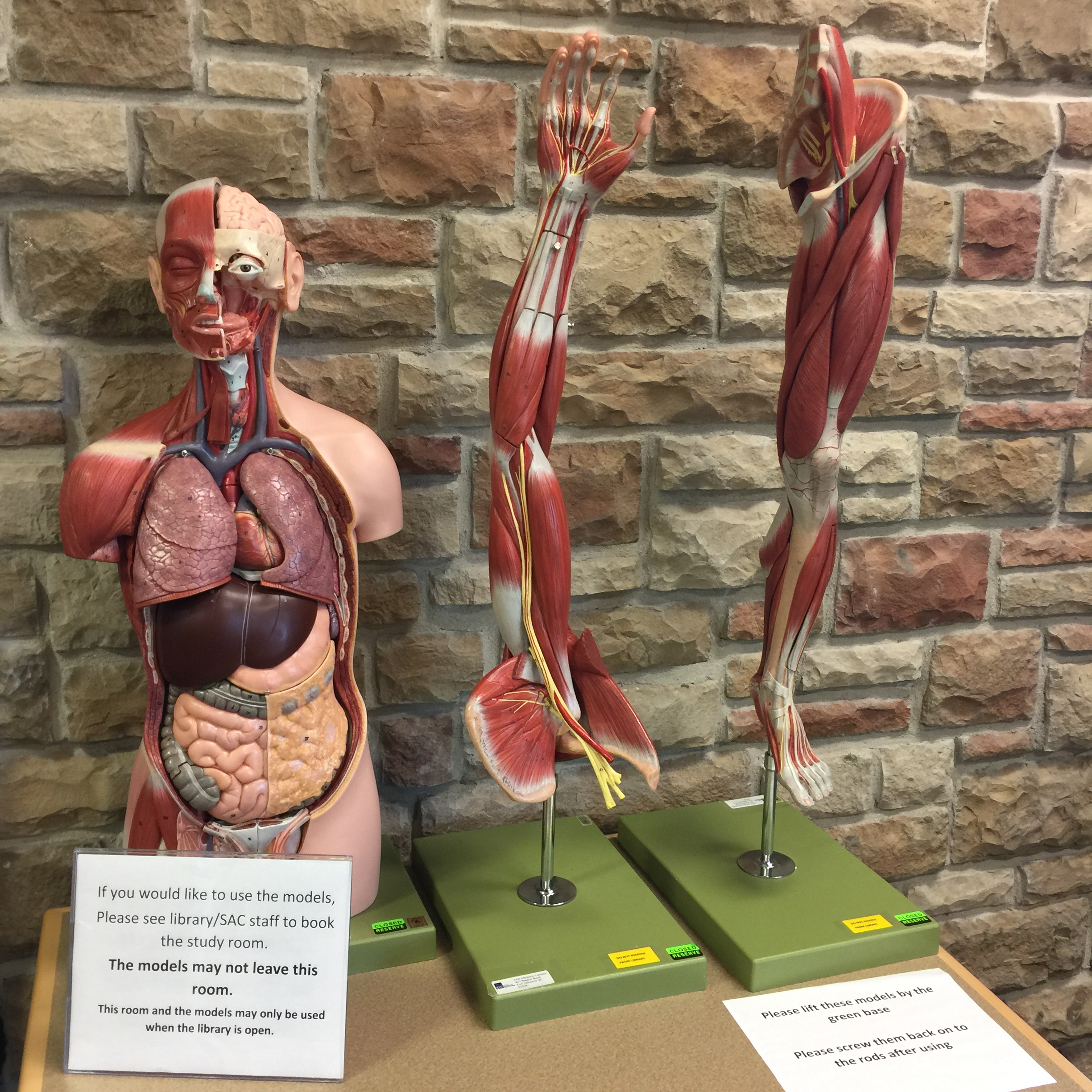 Anatomy models