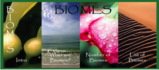 World Biomes - Santa Barbara