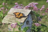 Monarch butterfly on birdhouse, photo