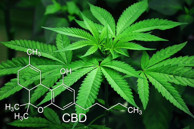 cannabis leaves overlaid with symbols denoting chemical signature of active ingredient thc