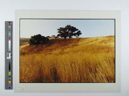 Near Oxnard, CA Field with trees