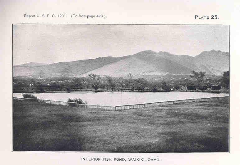 Black & White photo of Interior Fish Pond, Waikikī, Oʻahu, Report USFC 1901.