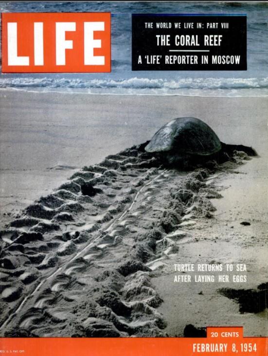 Life Magazine - available via Google Books Magazines