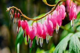 heart-shaped petals on a green vine