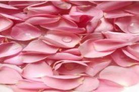 a pile of pink rose petals