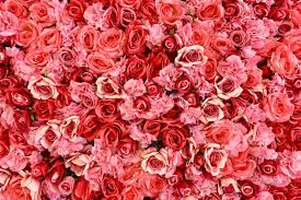 several pink and red carnations