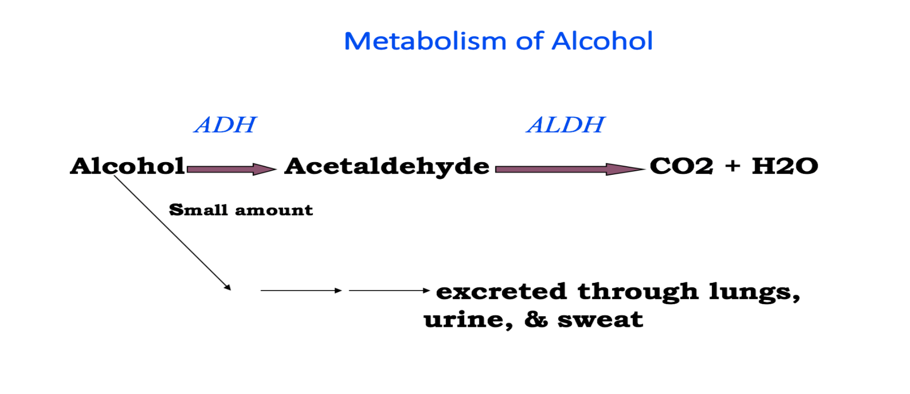 chemicals related to the metabolism of alcohol -- clerk does not understand to explain better