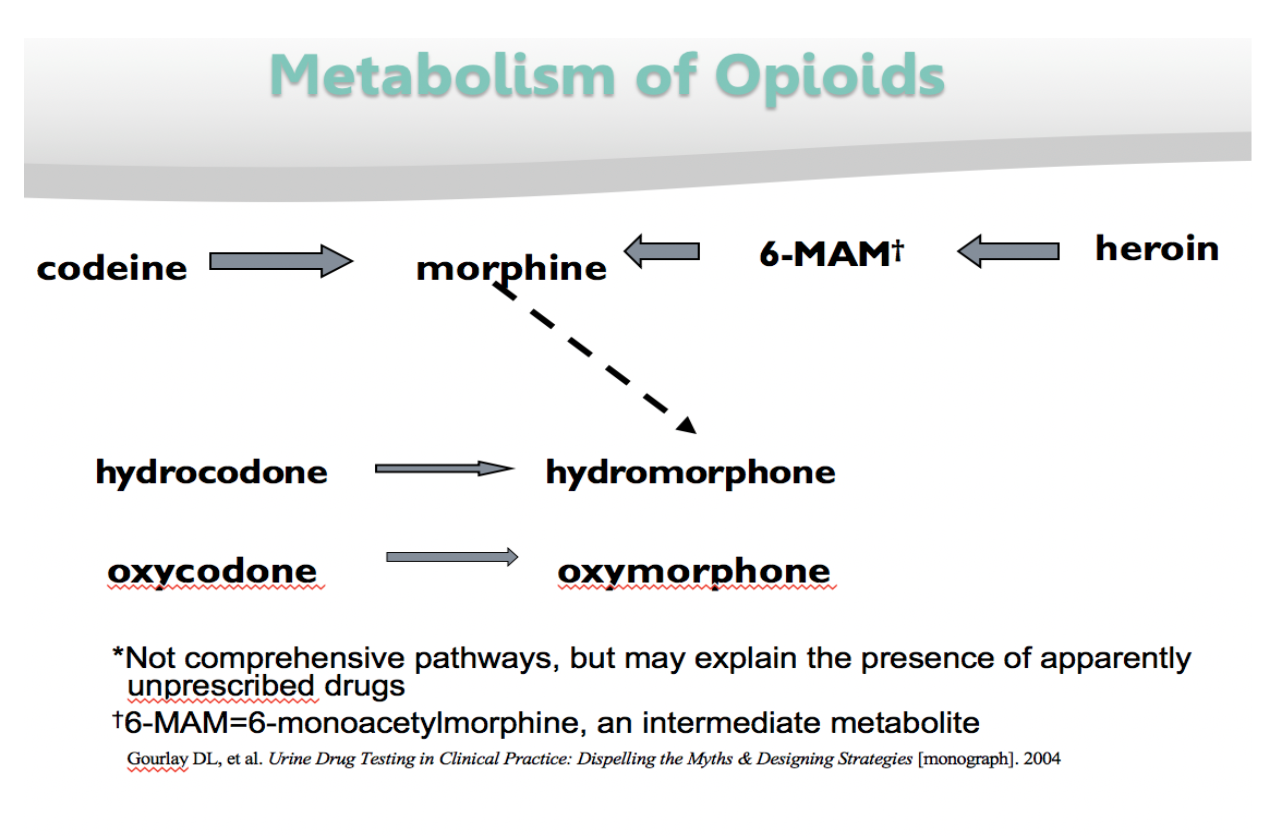 chart explains how opioids are metabolized. contact your professor for an explanation