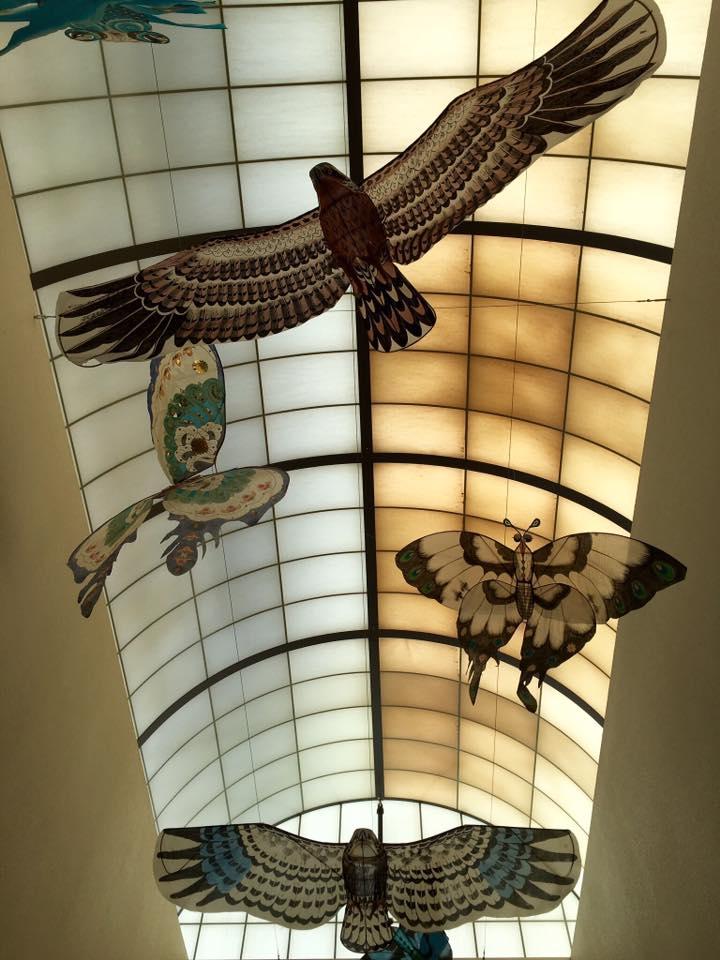photo of kites