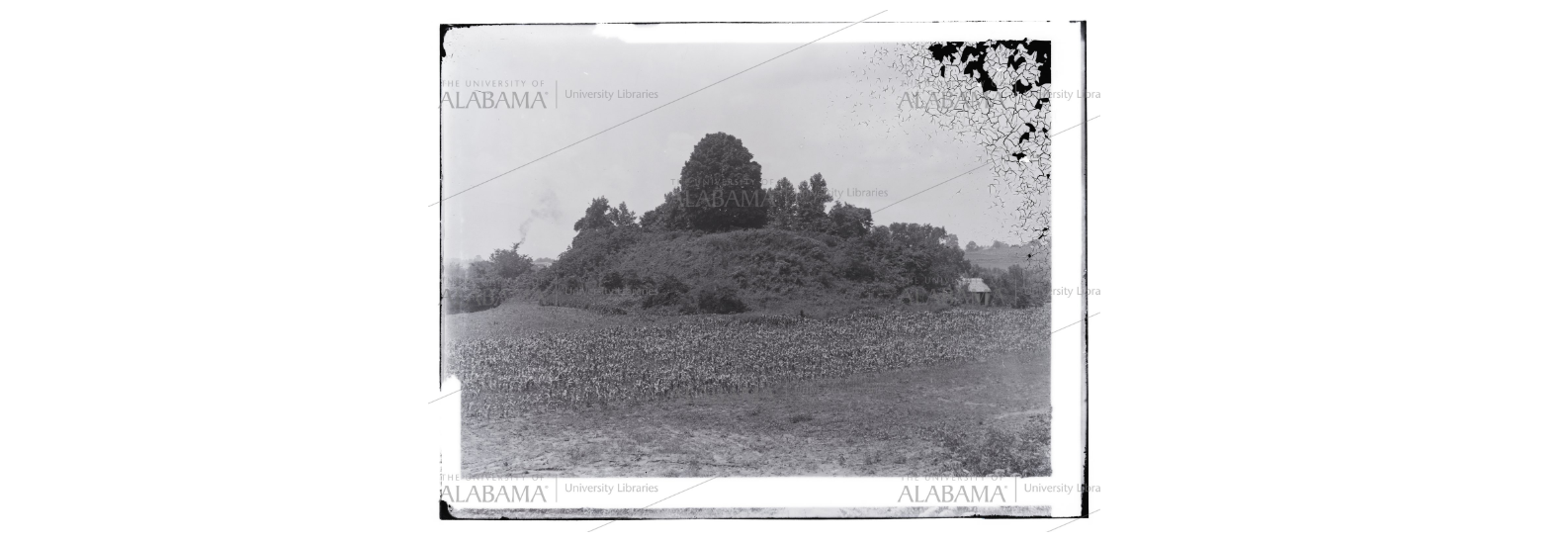 One of the mounds at Moundville, Alabama. Picture from 1902.