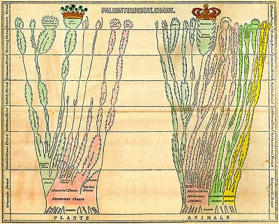 Paleontological chart from Edward Hitchcock's 1840 book Elemental Geology with two branching trees, for animals and plants.