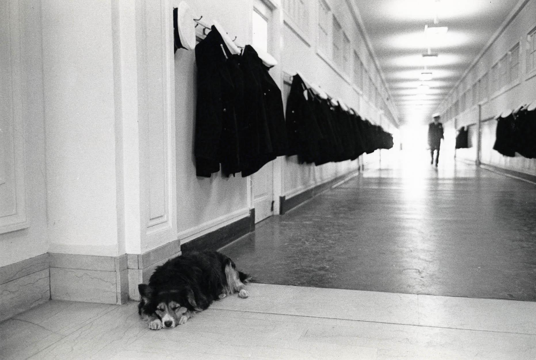 Dodo the dog sleeping in Academic building