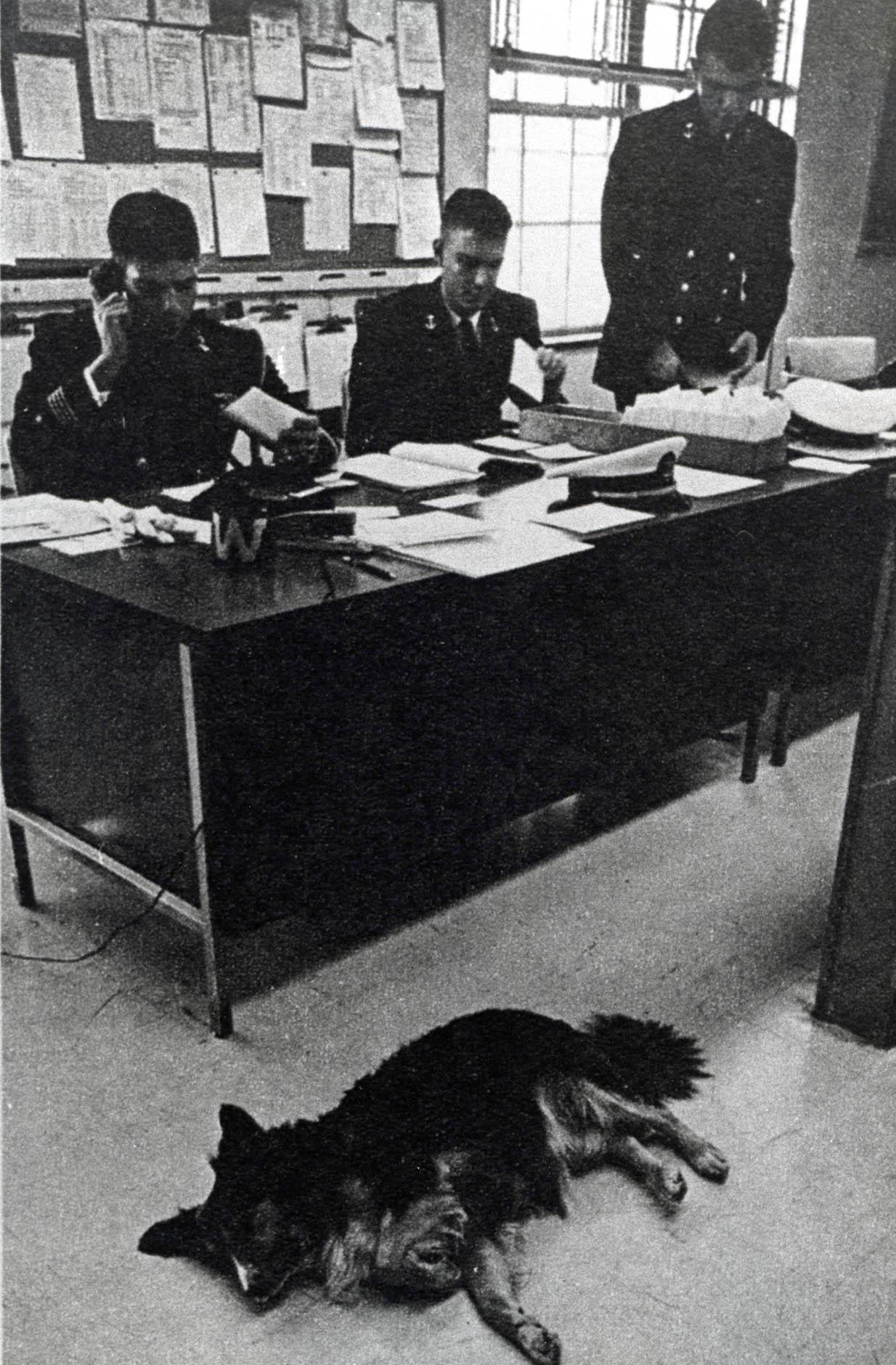 Dodo the dog in main office