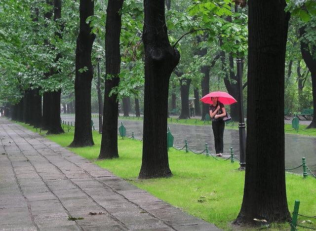 woman under pink umbrella among trees