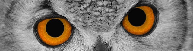 The eyes of an owl