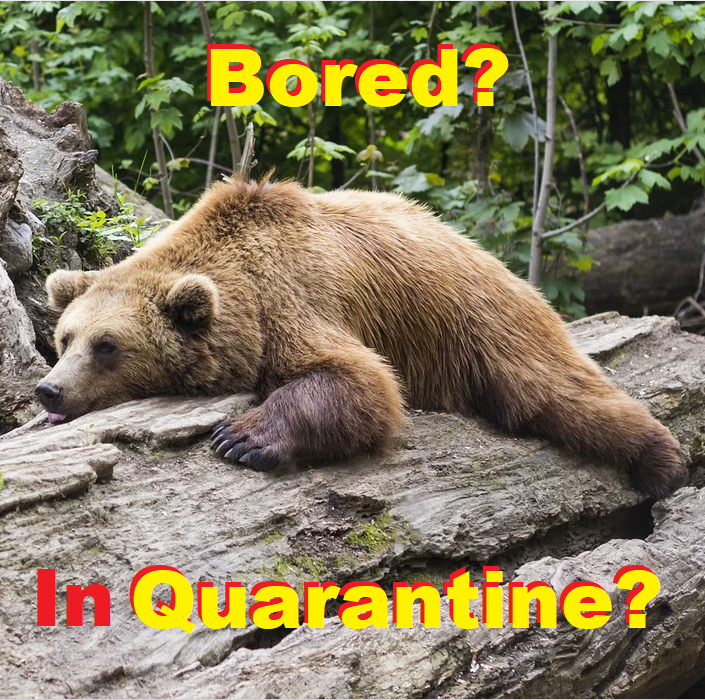 Bored bear in Quarantine