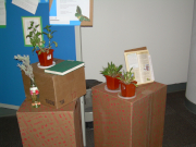 Plants were also part of the display.
