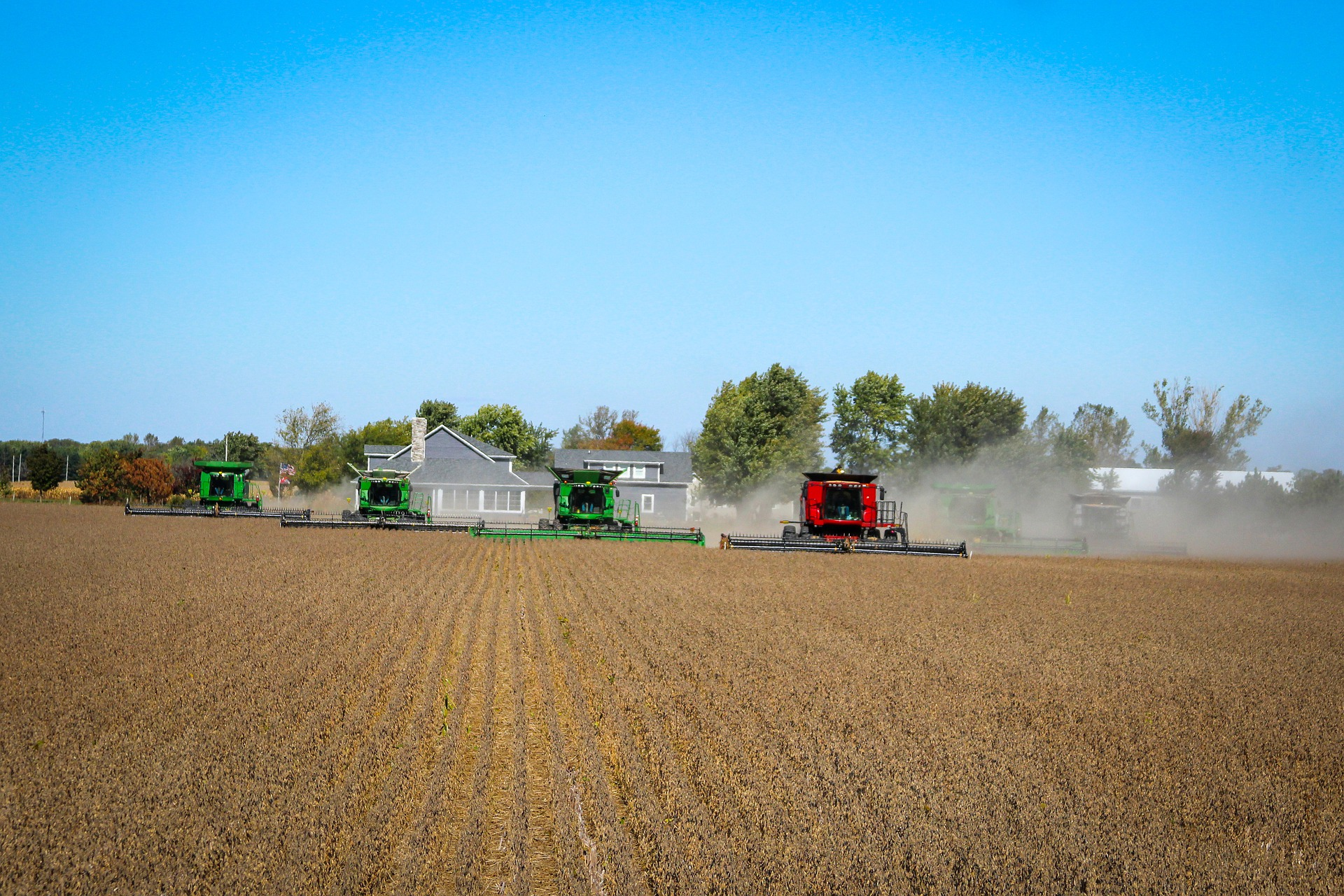 combines harvesting soybeans