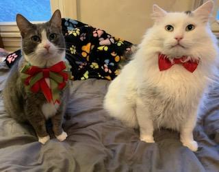 Kitties Spot and Frankie