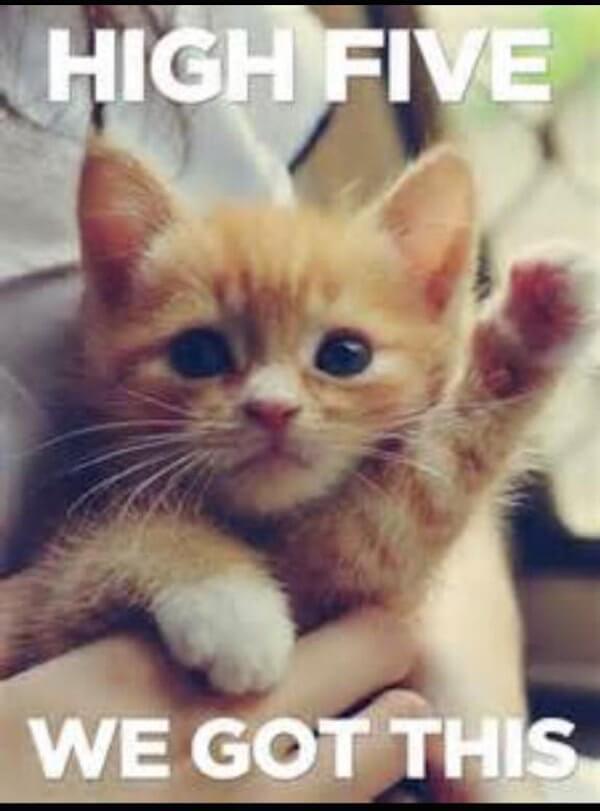 """Meme of Kitten raising 1 paw -""""High 5 We Got This"""""""