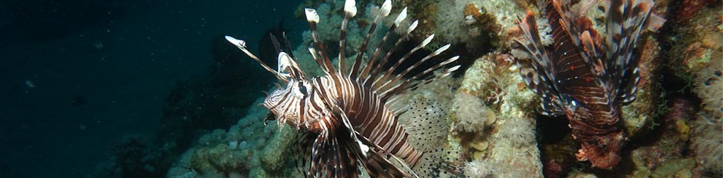 Two Lionfish Edited Pixabay Photo