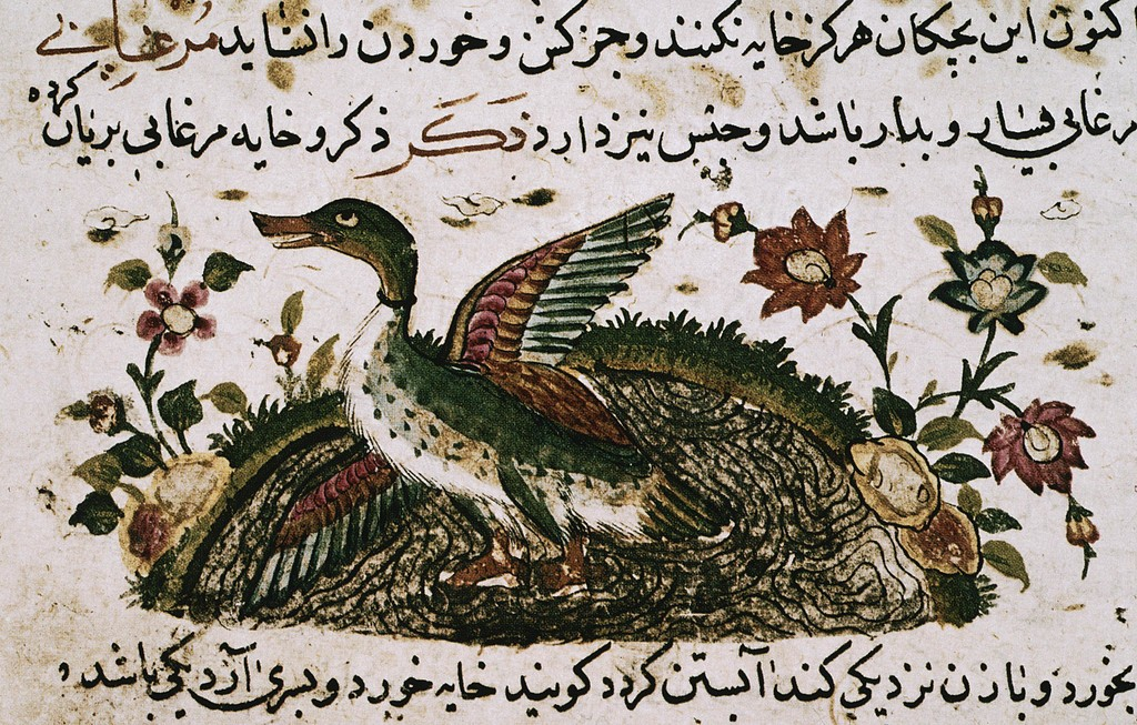 Cosmology of Al-Kazvini Duck in a pond Iranian calligraphy