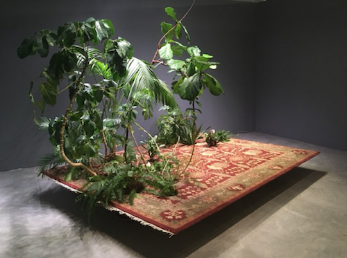 oriental carpet appearing to float above the floor with green plants sprouting fro one corner