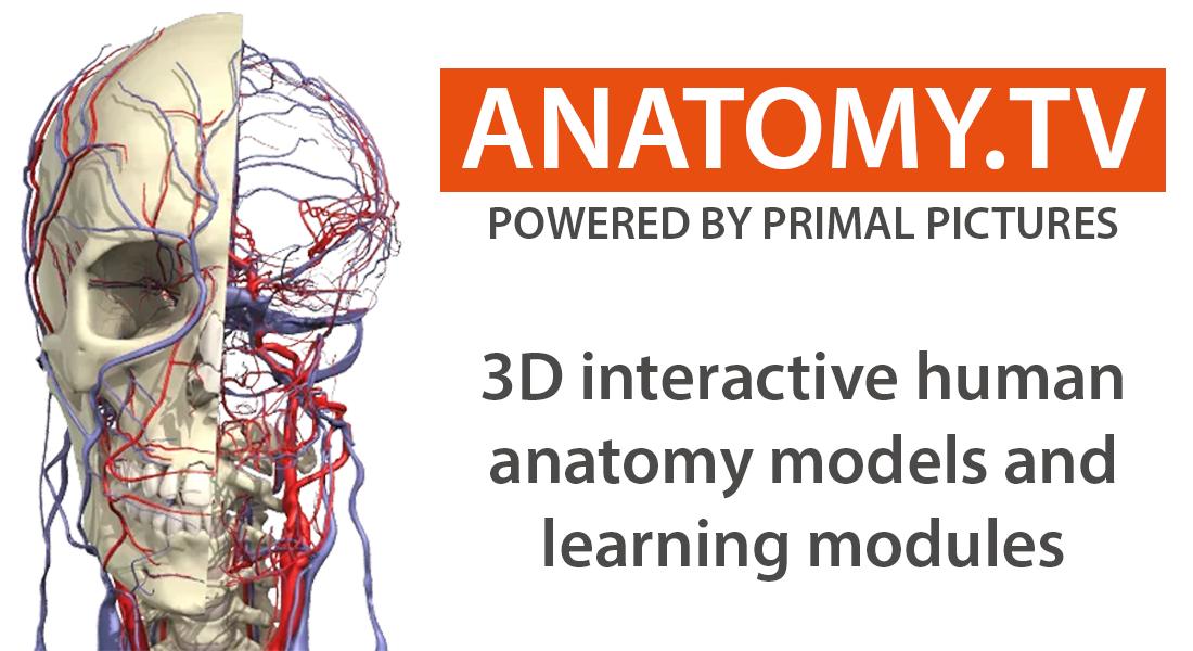 anatomy dot t v anatomy database