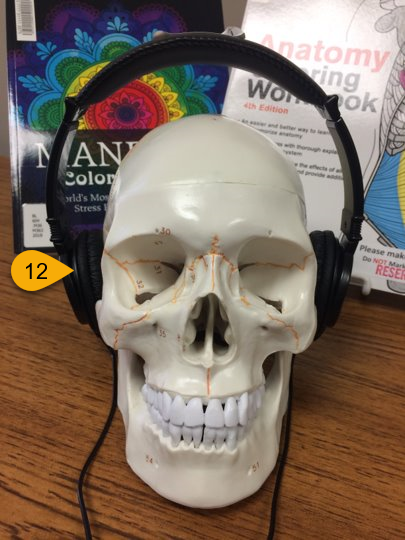 library items available for checkout include: skull model and headphones