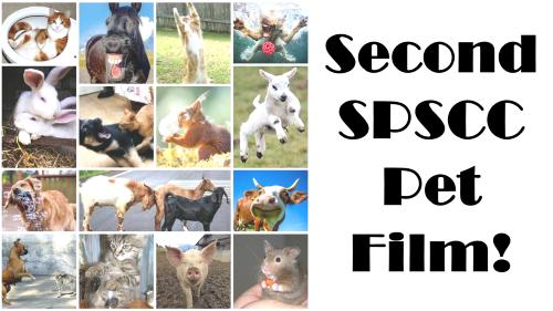Second SPSCC Pet Film poster