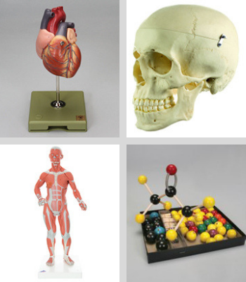 Examples of available models - heart, skull, muscles of body, molecule kit