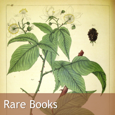 Link to Rare Books, Image: Folio with Flowering Plant in Color