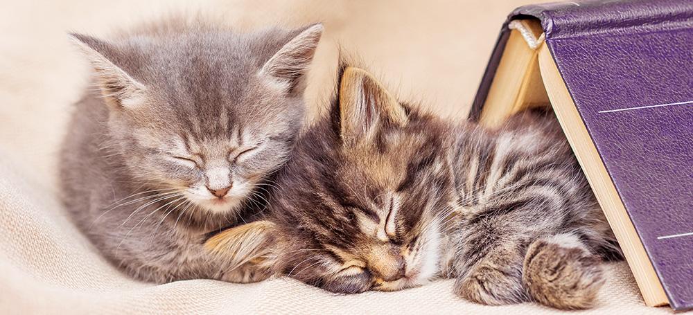 Librarians love books. Kittens love books. Librarians love kittens.