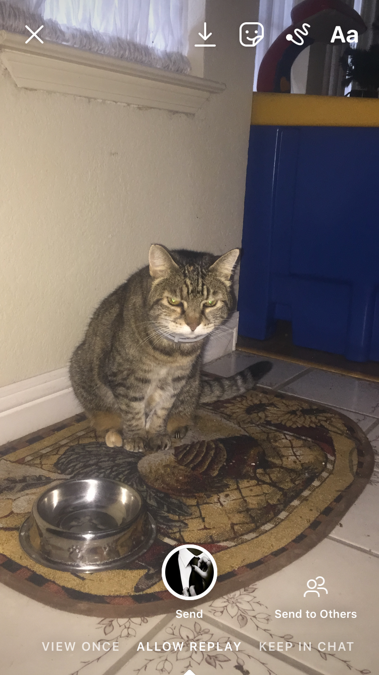 Tabby cat glaring at the camera, sitting on a rug near a food bowl