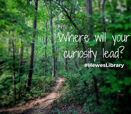 Where will your curiosity lead